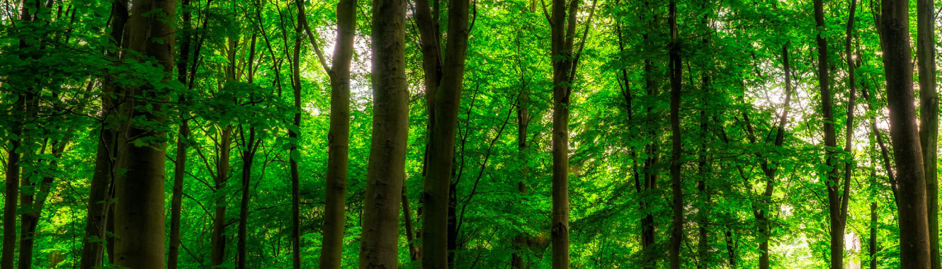 A thick forest with green trees.